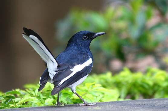 Birds of Bangladesh