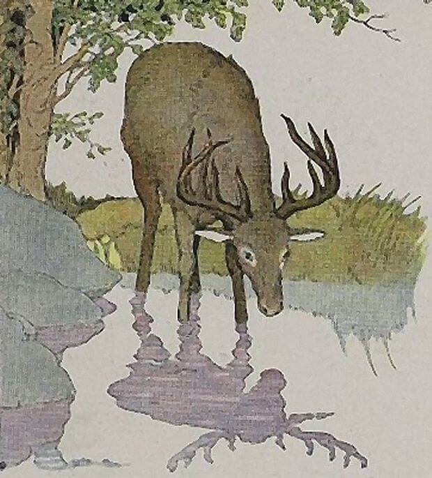 A foolish stag Story