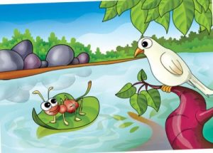 Ant And Dove Story