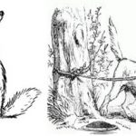 The Cunning Fox and Dog Story