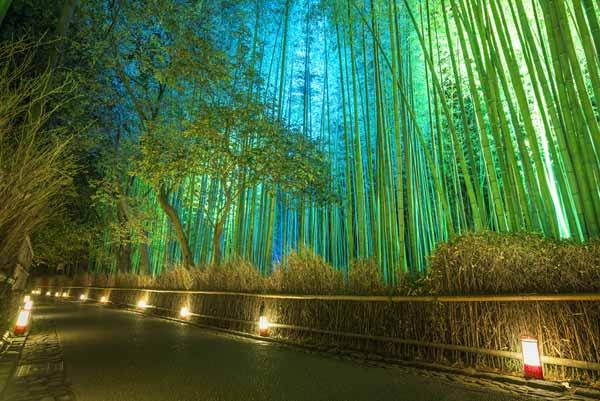 Arashiyama Bamboo Grove Images