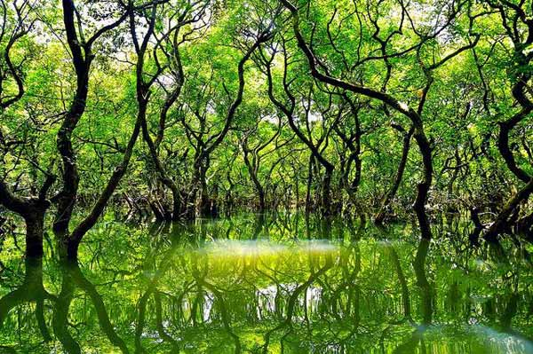 Ratargul Swamp Forest Tourist spot