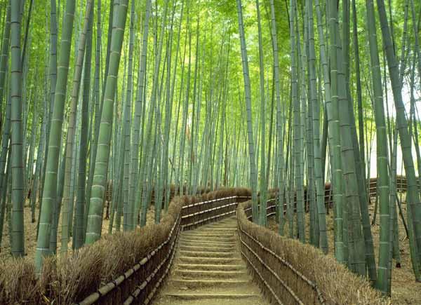Saga Arashiyama Area Photos