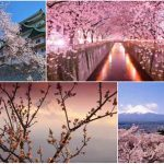 Top Japan Tourist Spots Pictures