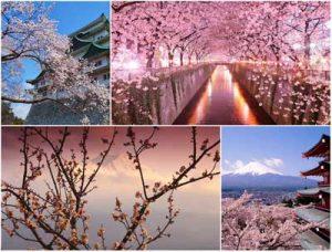 Top Japan Tourist Spots Pictures