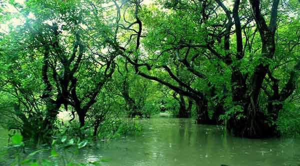 Ratargul Swamp Forest Images