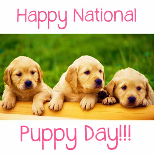 HAPPY NATIONAL PUPPY DAY GREETING