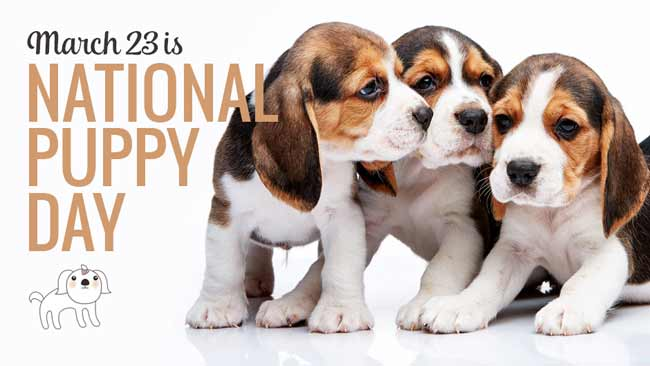 NATIONAL PUPPY DAY CUTE PUPPY