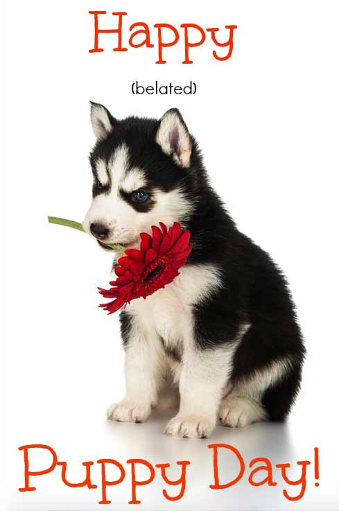 National Puppy Day Greeting