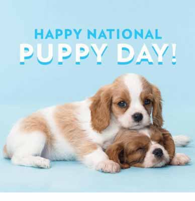 National Puppy Day Messages