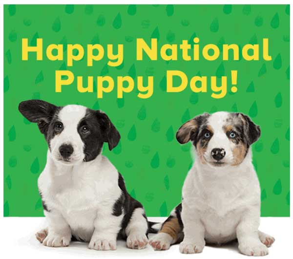 National Puppy Day SMS
