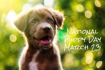 National Puppy Day theme