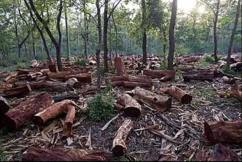 Deforestation Composition